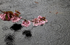 102. Royal Roads Pink Flowers and Water.jpg