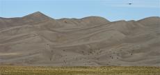 108. Sand Dune Birds.jpg