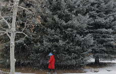 11. Cypress Snow and Woman in Red.jpg