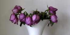 27. Dying Flowers.jpg