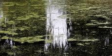 32. Monet-Like Pond.jpg