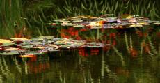 33. Monet Lilies on Pond.jpg