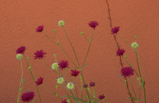 95. Pearl Street Flower Wall.jpg
